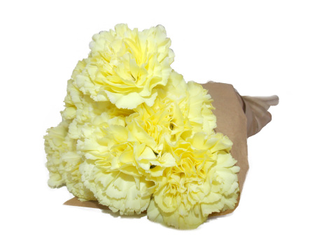 Carnations fresh flowers online same day sydney delivery yellow carnations mightylinksfo