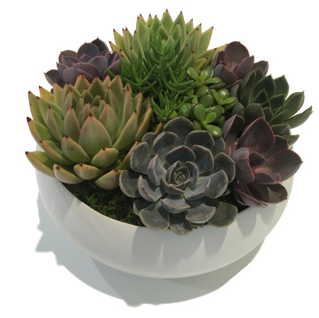 Succulent Garden in White Ceramic Pot
