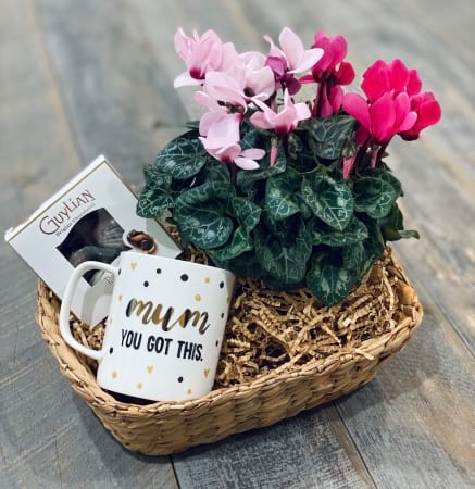 Cyclamen plant Hamper