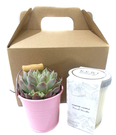 Succulent Bucket (Pink) and Scented Candle Pack