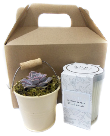 Succulent Bucket (cream) and Scented Candle Pack