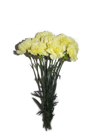 Yellow carnations at wholesale prices delivered in sydney yellow carnation mightylinksfo