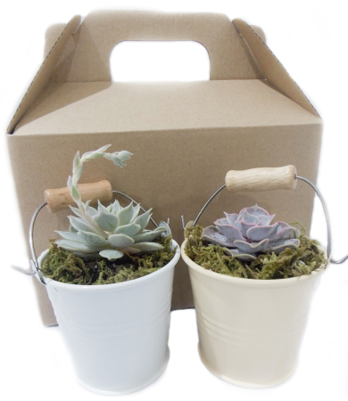 Twin Succulent Pack