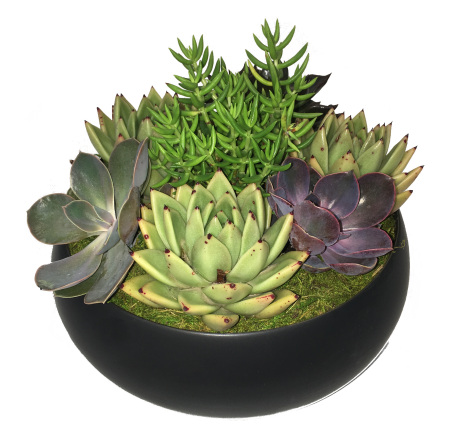 Succulent Garden in Black Ceramic Pot
